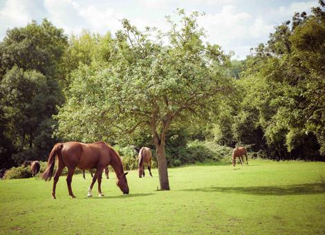 photographe chevaux haras cambremer calvados